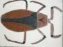 Insekten 6b